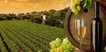 5 Curiosità sul vino