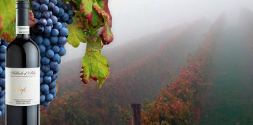 Nebbiolo, uno dei vini più pregiati del Piemonte - Nebbiolo Colla e Nebbiolo d'Alba